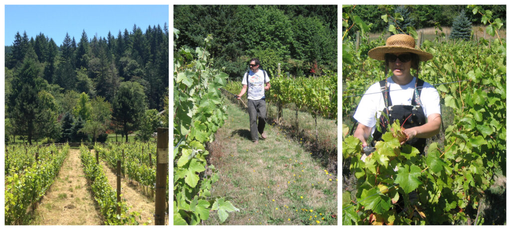 Workin in the vineyard.
